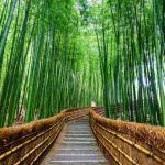 Arashiyama's Path of Bamboo a