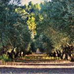 Adelfoi Forest