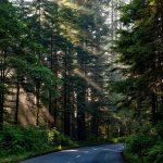 Akamas Forest