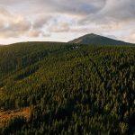 Hroboskalsko Forest