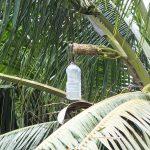 Palm Wine Seychelles
