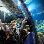 Bristol Aquarium 1