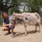 Corfu Donkey Rescue 1