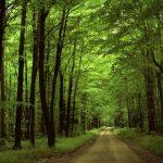 Mercadante Forest 1