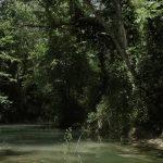 Parco Naturale Regionale Bosco Incoronata 1