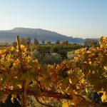 Vini Sorrentino – Bay of Naples #2