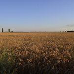 Hromovysche meadow