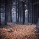 Witkowice Forest